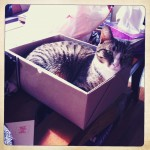 Kitty in a (ballot) box
